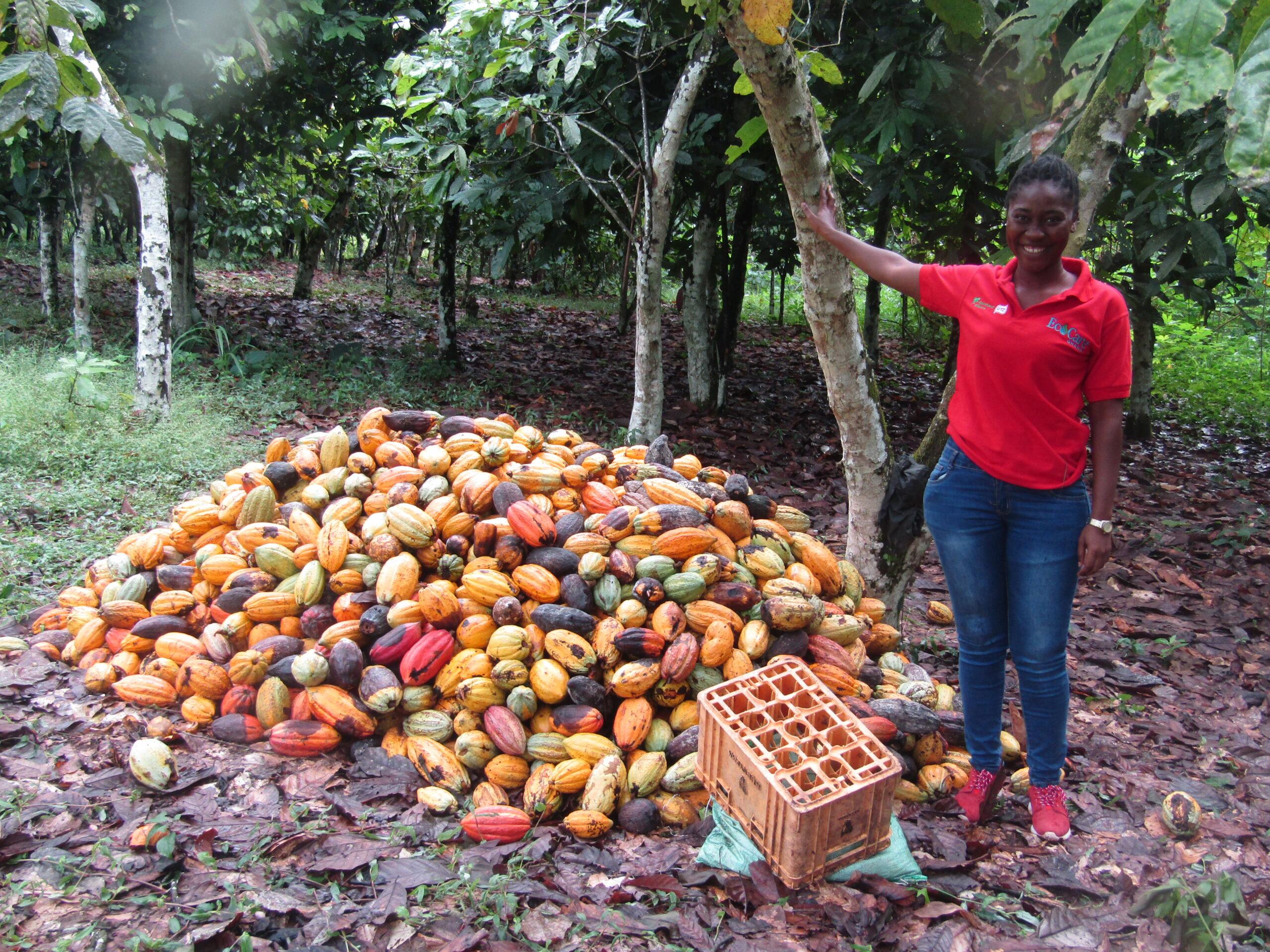 Cocoa Farmers Bemoan Unfavourable Land Tenure System