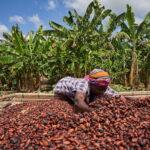 GCCP statement on COCOBOD/CCC farmer income communique