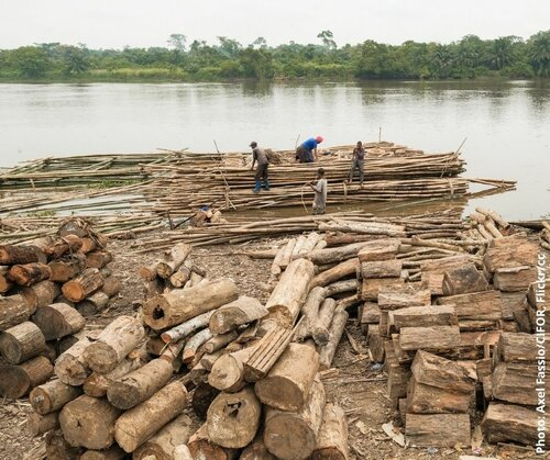 Read more about the article Government dragged to court over issuance of 'special permits' as Timber Rights