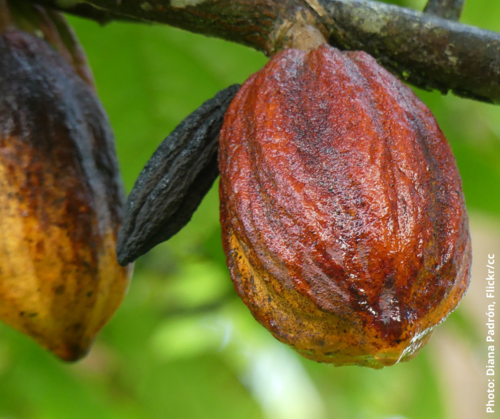 Read more about the article AS THE FIRST ROUND OF EU-GHANA-COTE D'IVOIRE COCOA TALKS WRAPS UP, THE WAY AHEAD IS STILL UNCLEAR