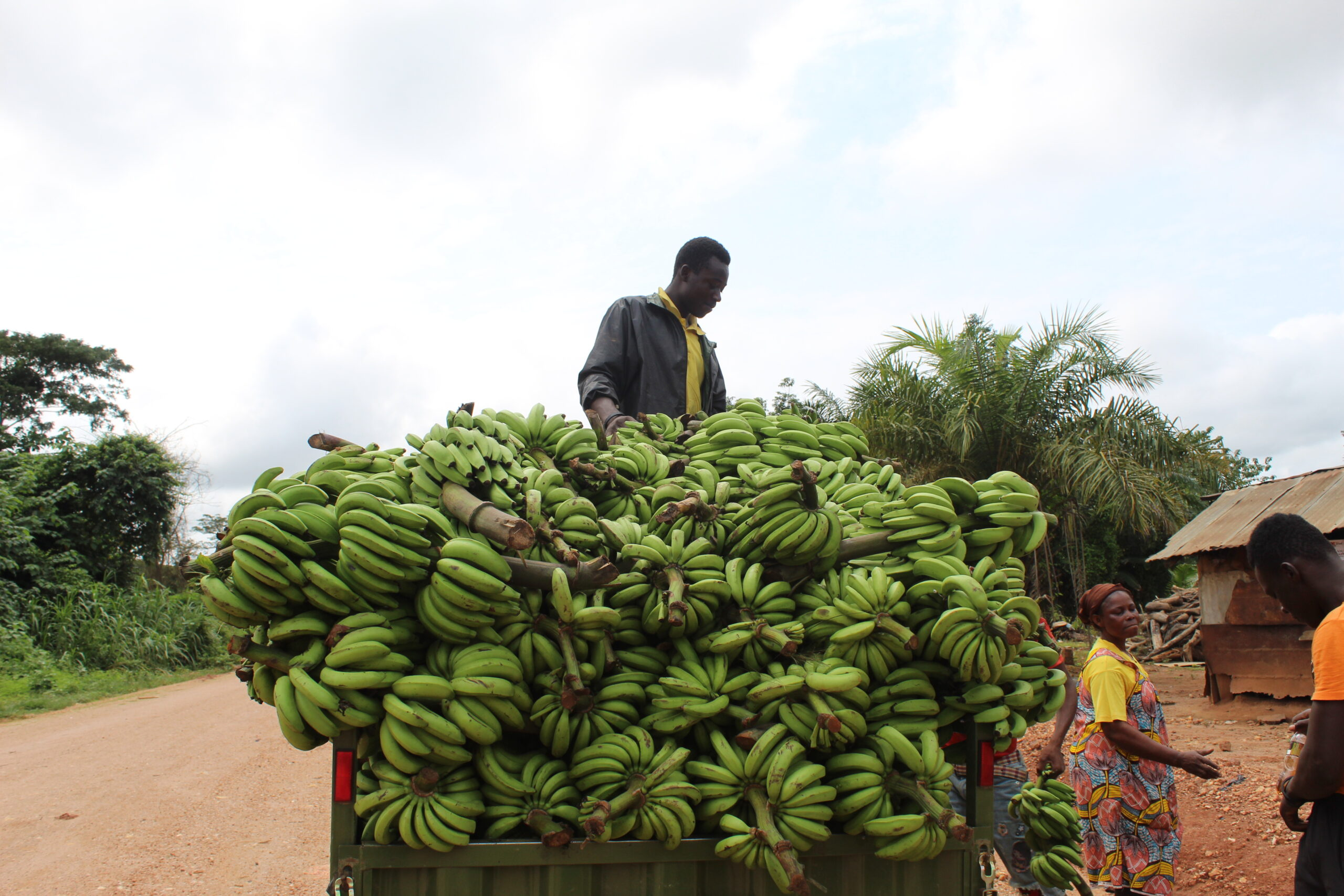 Read more about the article Farmers call on stakeholders to intervene in food production and marketing