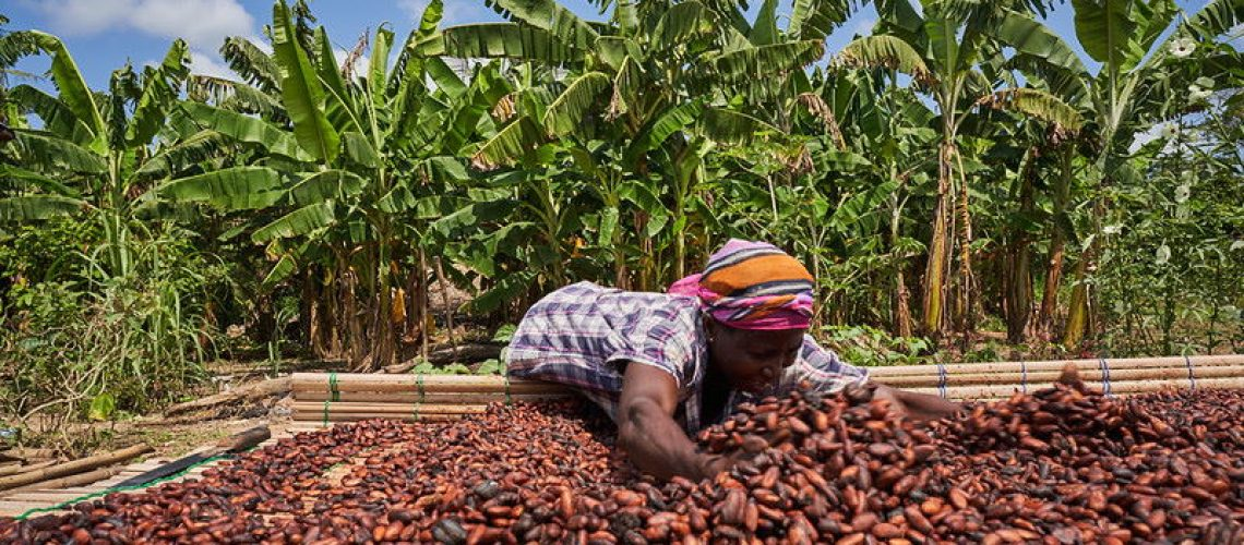 Cocobod-set-to-increase-price-of-Ghana-s-cocoa